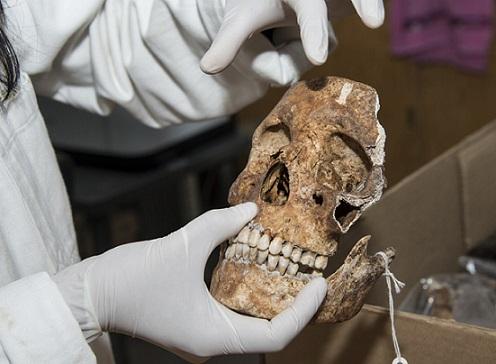 En el cráneo la parte superior de las órbitas es anatómicamente menos pronunciada en las mujeres que en los hombres, dijo la doctora Lilia Escorcia investigadora del Instituto de Investigaciones Antropológicas de la UNAM (Foto: Arturo Orta/AMC).