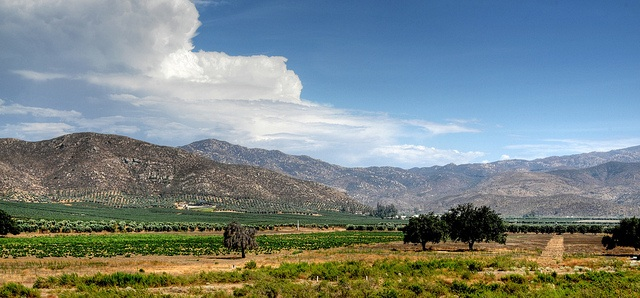 GUADALUPE VALLE