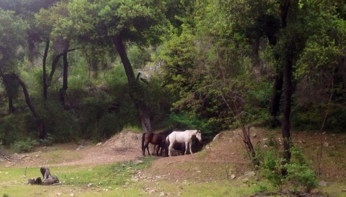 caballos en camino a san antonio minas