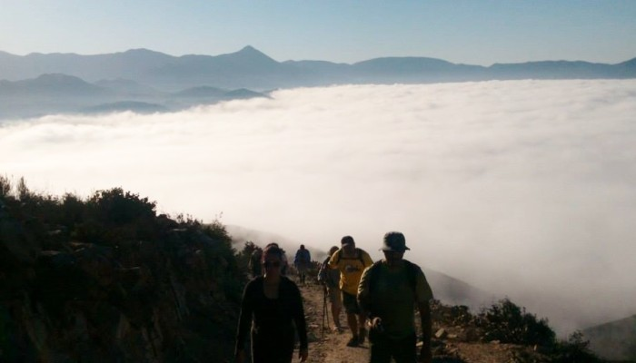 attenuata neblina Juan Carlos Velazquez