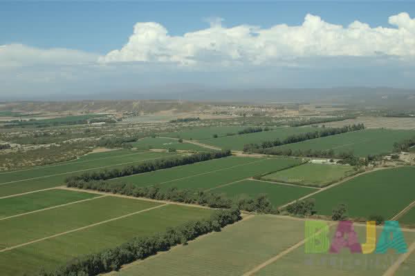 campos fresa 2