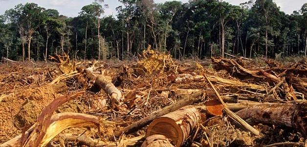 DEFORESTACION AMAZONAS