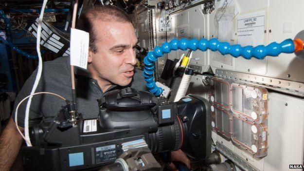 Los investigadores compraron el comportamiento de las colonias en el espacio con el de colonias en la Tierra (Foto: NASA)