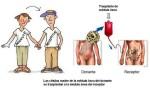 MEDULA OSEA DONACION