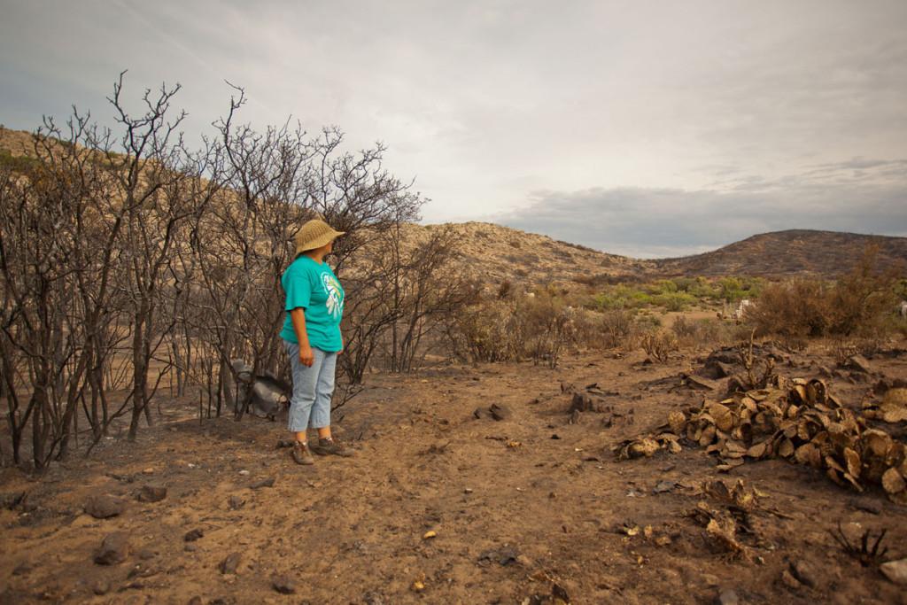 Los kumiais, fuertes ante la adversidad (Foto: Edgar Lima, La jornada BC).