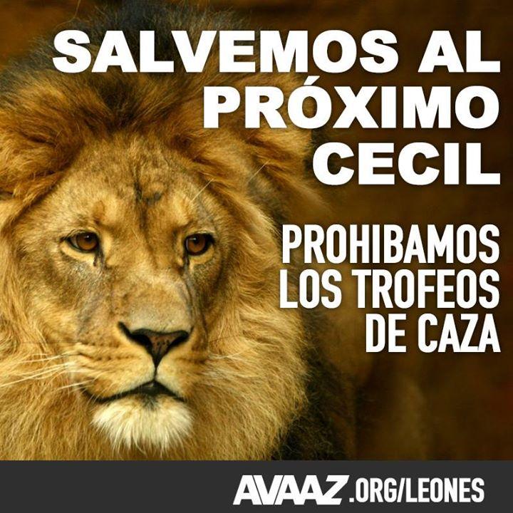 LEONES SALVAR AVAAZ
