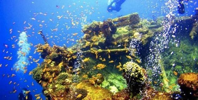 El arrecife artificial en uno de los barcos que se hundoeron en La Paz, Baja California Sur (Foto: México Desconocido):