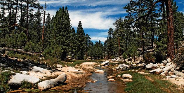 Uno de los arroyos permanentes de la Sierra de San Pedro Mártir en donde habita la trucha arcoiris (Cortesía).