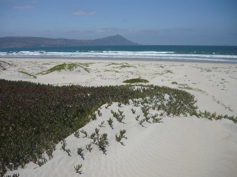 Una fracción de la playa de la lengueta arenosa del Estero Punta Banda (Foto: cortesía).