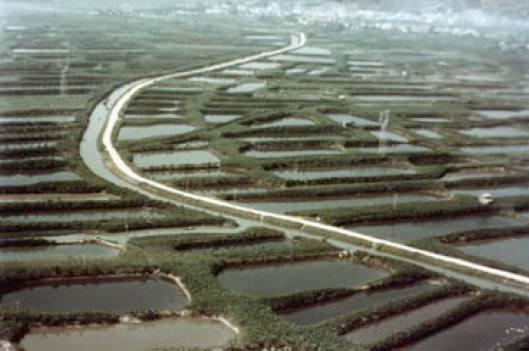 Campos de producción artificial de peces en China (Foto: internet).
