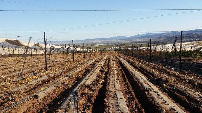 Campo agrícola en el valle de Maneadero (Foto: Cortesía).