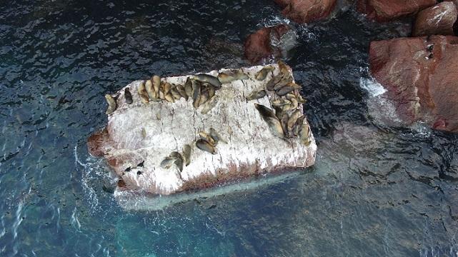 Lobos marinos (Foto: Karen Adame).