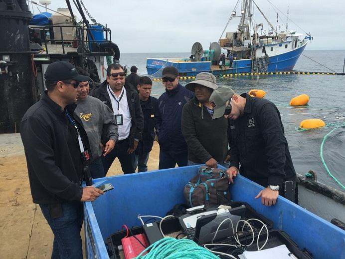 Buzos, empresarios y autoridades preparan la liberación del atún cola azul vivo al Océano Pacífico.