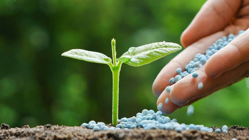 Innovando la producción de fertilizantes a menor costo y altamente eficientes (Foto: Globovisión).