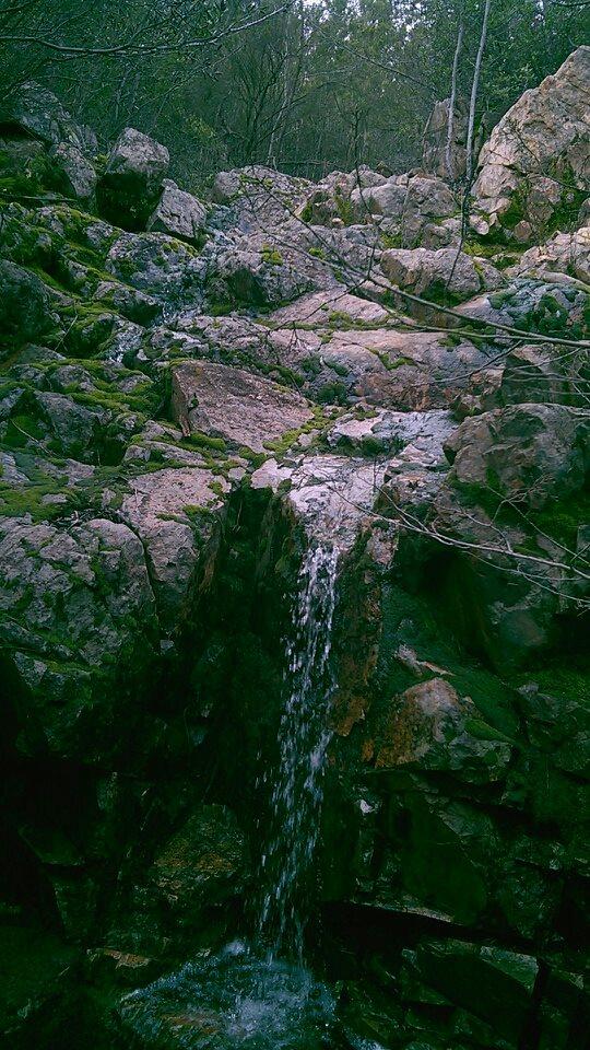 Bosque de belleza singular (Fotos: Archivo).