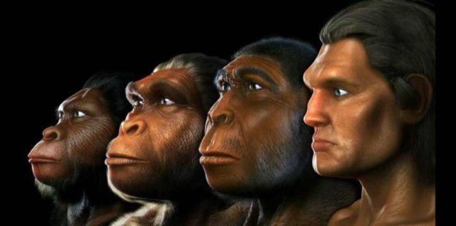 evolucion_sciencephotolibrary-bbc_2