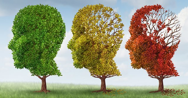 El tamaño del cerebro ha aumentado en cerca de un 350% durante la evolución humana, mientras que el flujo de sangre al cerebro se ha incrementado en un increíble 600% (Foto: internet).