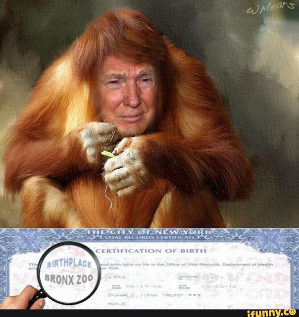 Donald Trump orangutan birth certificate