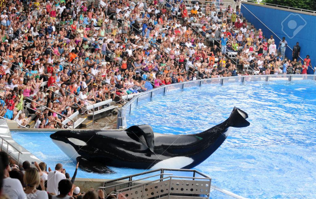 orca-en-cautiverio-espectaculo