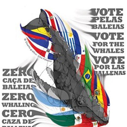 ballenas-vote-vs-caceria-cartel