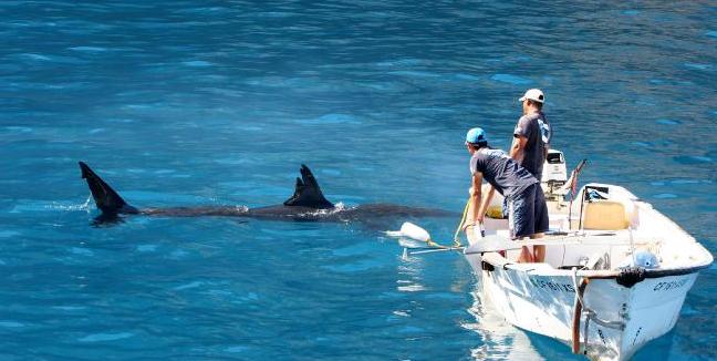 tiburon-blanco-pescadores-guadalupe