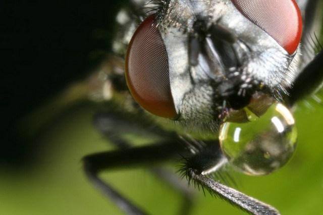 mosca-rostro
