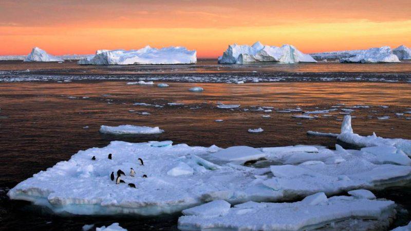antartida-pinguinos-adelaida