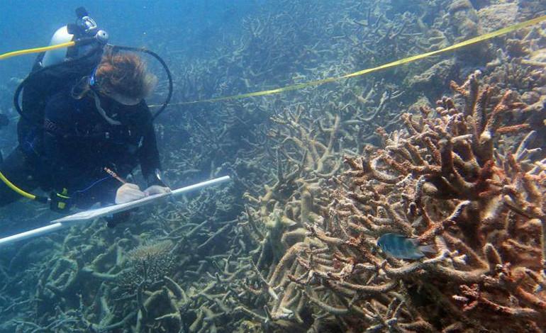 arrecife-japon-se-muere-buzo