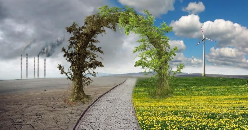 cambio-climatico-arboles-entrelazados