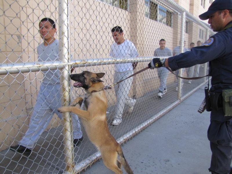 carcel-reos-y-perro-guardia