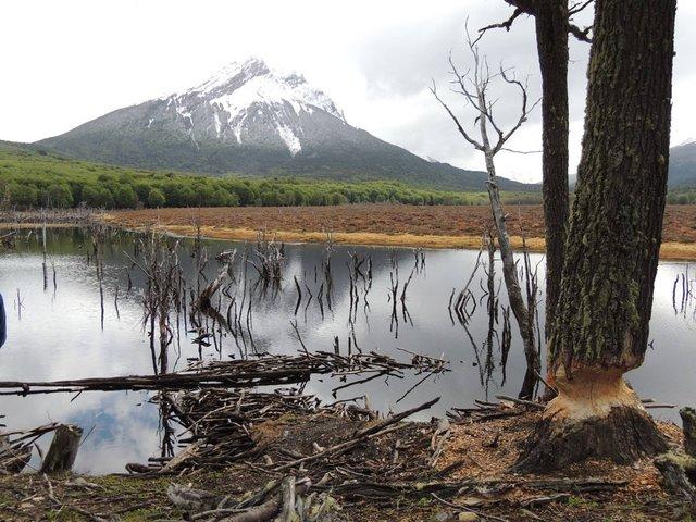 castores-lago-montala-nieve