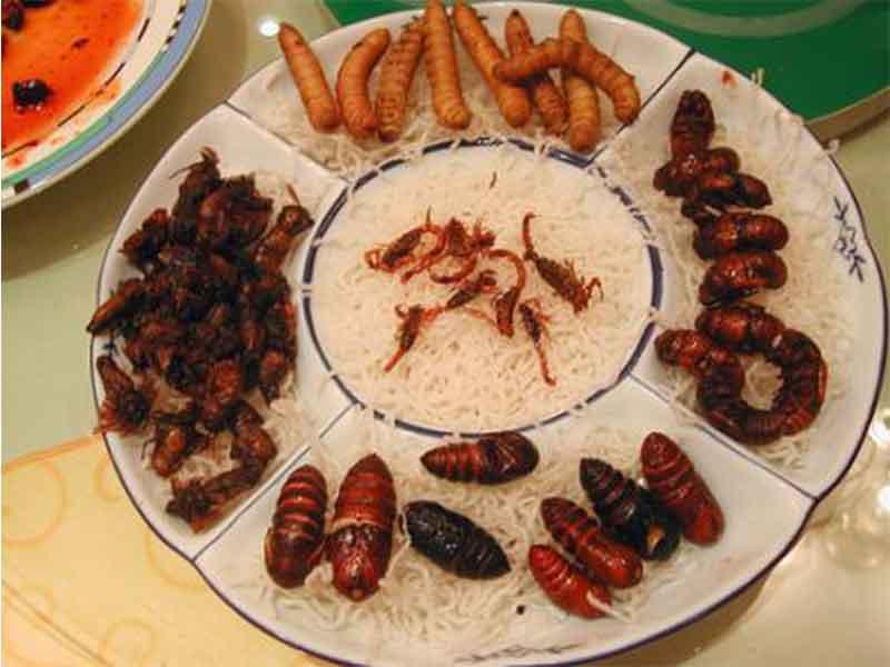 insectos-comestibles-charola
