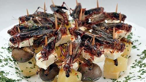 insectos-comestibles-grillos