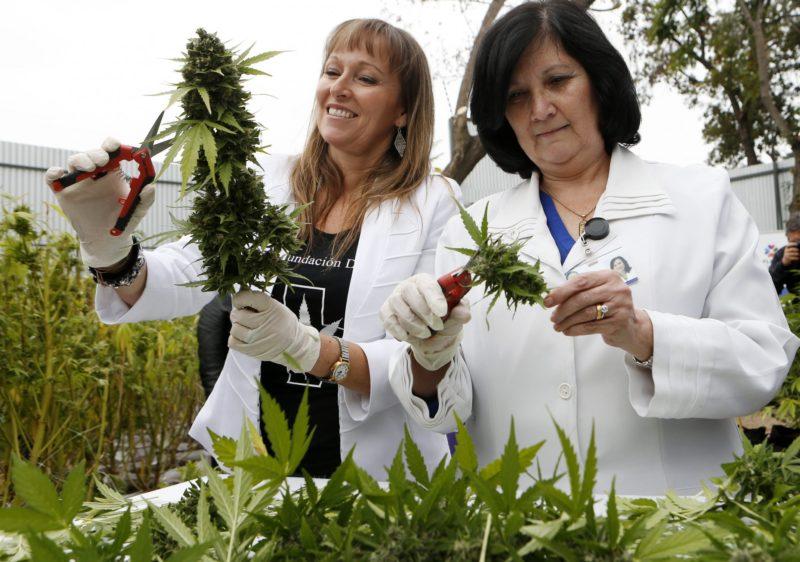 mariguana-cultivo-legal-uruguay