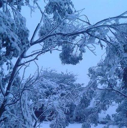 nevada-tecate-2