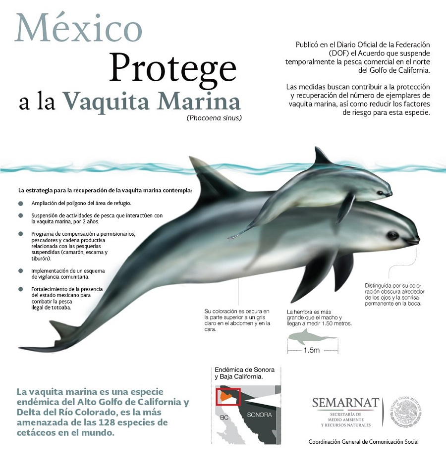 vaquita-marina-proteccion-semarnat
