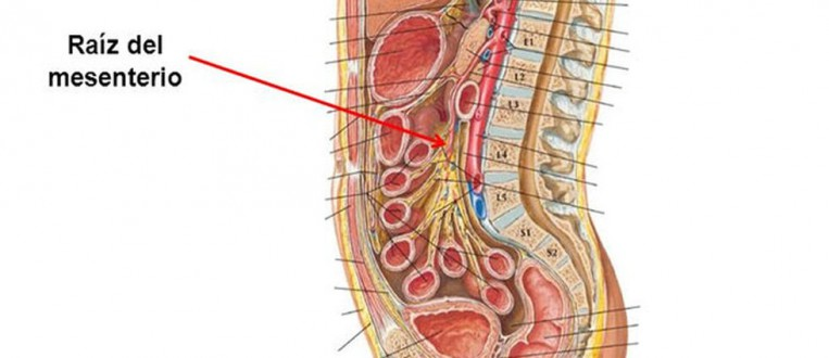 mesenterio-en-cuerpo-humano